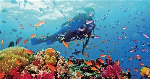 斐济海水清澈透底,海底资源非常丰富